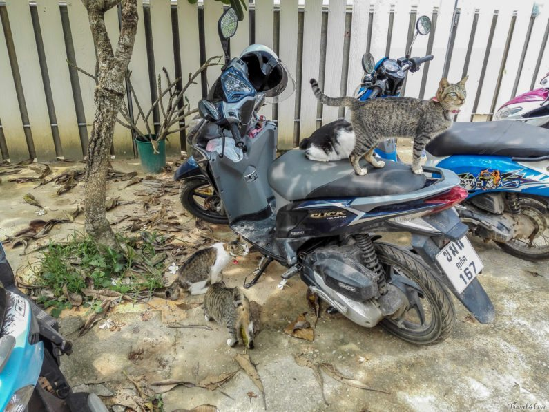 Возле питомника Soi Dog на Пхукете
