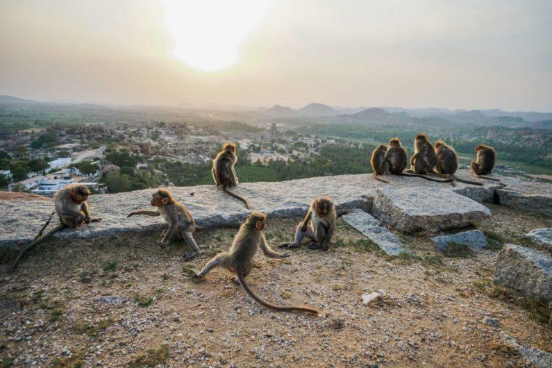 Встречаем закат вместе с мартышками на вершине скалы, Хампи