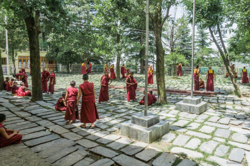 Дворик, где на глазах туристов пасутся тибетские монахи. .