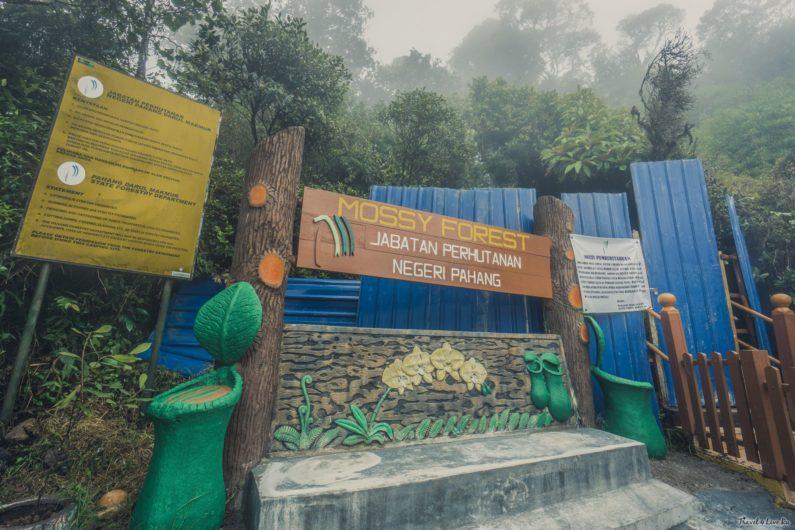 Вход в основной туристический Mossy Forest был закрыт