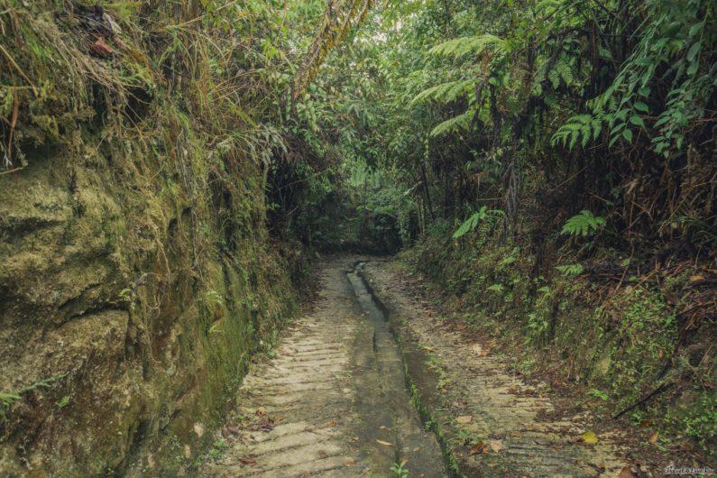 Мшистый лес (Mossy forest) Кемерон Хайлендс