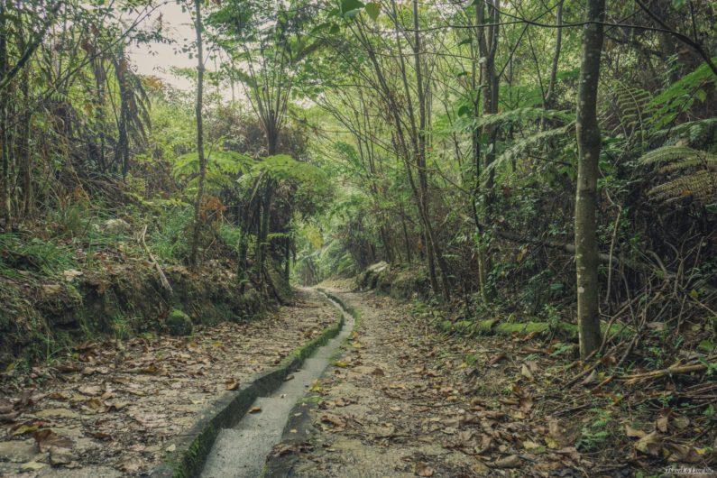 МалайзияМшистый лес (Mossy forest) Кемерон Хайлендс