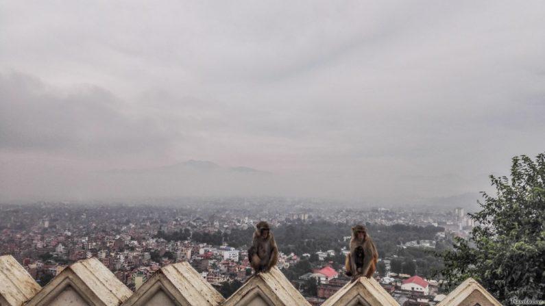 Катманду, обитатели храма Сваямбунатх :-)