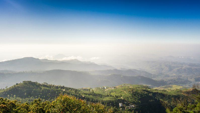 Вид на чайные плантации
