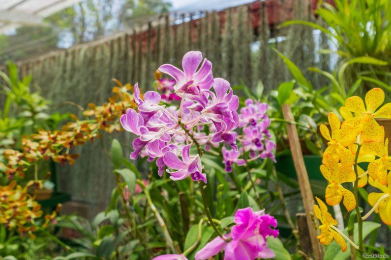 Ботанический сад Канди